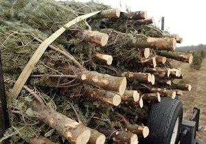 В Латвии незаконная вырубка елей теперь может караться четырьмя годами тюрьмы