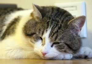Жителя Одессы приговорили к тюремному заключению за жестокое обращение с котом
