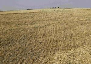 Из-за дождей в Украине пострадали 8% посевов зерновых