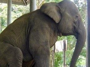 Ветеринары Таиланда увеличат численность слонов, выращивая их в пробирках