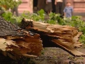 В Крыму дерево упало на пятилетнюю девочку
