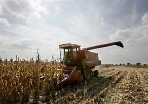 Украина намерена распределить квоту на экспорт кукурузы на аукционе