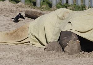 Расследованием причин смерти слона в Киевском зоопарке займутся независимые комиссии