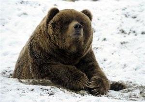 Из Украины в Польшу сбежал медведь