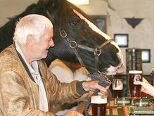 В Британии лошадь-завсегдатая паба принудили бросить пить