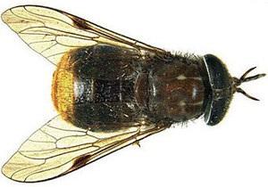 Ученые назвали насекомое в честь Бейонсе