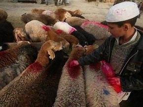 Авиация НАТО расстреляла стадо баранов в Афганистане, приняв их за талибов