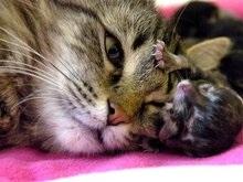Кошки спасают от сердечно-сосудистых заболеваний