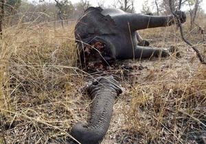 В национальном парке Камеруна убили сотни слонов
