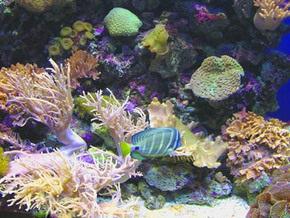 Популяция рыб в Карибском море сократилась более чем вдвое