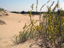 В  Херсонской области состоится переход через самую большую пустыню в Европе