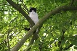 новости Киева - кот - животные - Киевские спасатели достали кота, просидевшего три дня на тополе