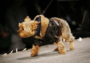 Фотогалерея: На поводке у моды. Собачье фэшн-шоу в Нью-Йорке