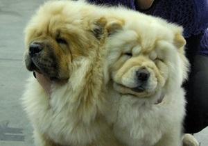 Фотогалерея: Съезд четвероногих. В Киеве прошли две международных выставки собак