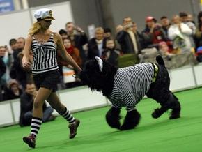 В Киеве состоялись две международные выставки собак