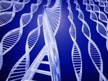 Гены расскажут о месте рождения человека