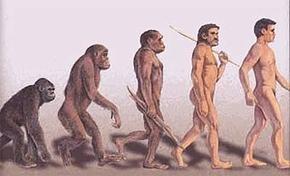 Обезьяна могла эволюционировать до человека из за плохой видимости в темноте