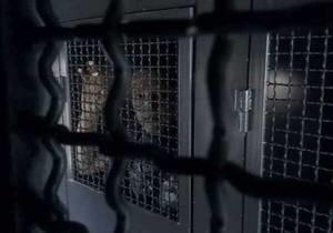 Межигорье - Янукович - Демальянс - задержали активистов - Возле Межигорья милиция задержала четырех активистов Демальянса за акцию против Януковича