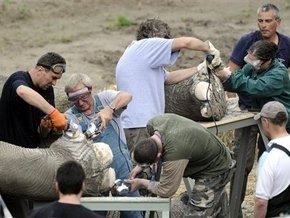 Слон Бой успешно перенес операцию