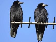 Ученые: Птицы видят лучше, чем люди