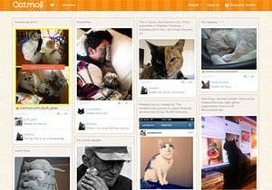 В интернете появилась социальная сеть для любителей котов