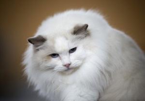 Кот пронес в тюрьму мобильный телефон в пакете с макаронами