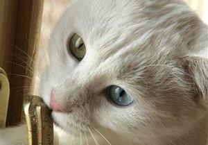 Австралиец оторвал голову кошке на глазах у ее хозяйки