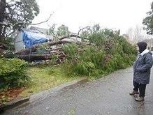 В Житомирской области дерево убило солдата
