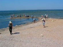 В Азовском море началась массовая гибель рыбы