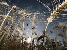 ВБ: Продовольствие будет дорожать ближайшие три года