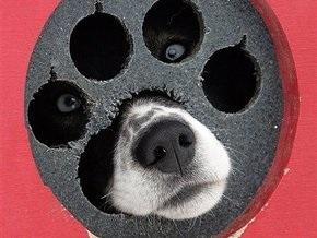 В Киеве на Подоле появилась собака-рекламоноситель