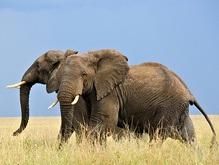 Эксперты: 25% млекопитающих на планете находятся на грани вымирания