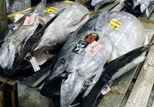 В Токио гигантский тунец продан за рекордные $170 тыс.