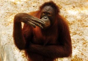 В Индонезии курящую обезьяну решили отправить в реабилитационный центр