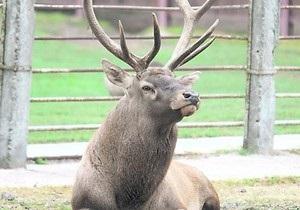 В киевском зоопарке умерла самка оленя