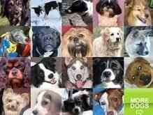 Собачья социальная сеть стала находкой года