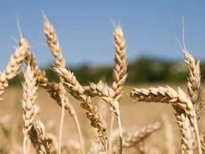 Украина уже экспортировала более семи миллионов тонн зерна