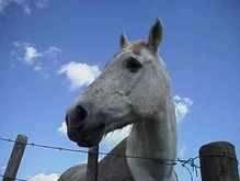 Техасской официантке дали лошадь на чай