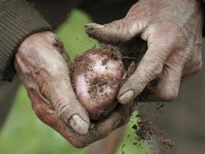 Украина вошла в пятерку мировых производителей картофеля