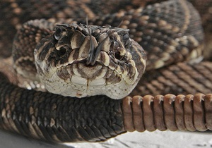 Гремучая змея укусила покупателя в магазине Wal-Mart