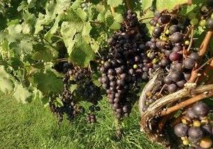 Любителей вина во Франции становится все меньше