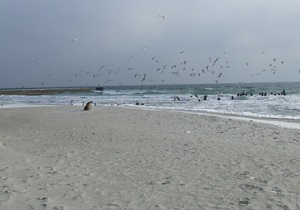 В море возле Одессы попали десятки тонн фекалий: все городские пляжи закрыты