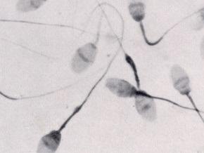 Британские ученые: Привлекательные мужчины выделяют меньше спермы