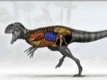 Ученые: Динозавры пережили два периода вымирания