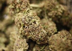 В Ивано-Франковской области милиция изъяла почти 30 кг марихуаны