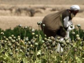Афганскую провинцию объявили зоной, свободной от посевов наркокультур