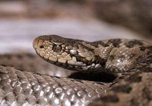 В Ивано-Франковской змея укусила мужчину и ребенка