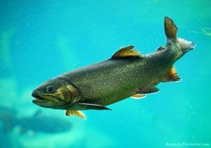 Новости науки: Биологи обнаружили рыбу, которая может прожить год без еды