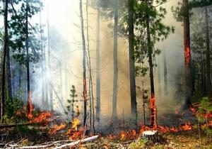 Арестован директор Новомосковского лесхоза, на территории которого сгорело 550 га леса