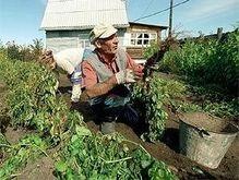 В Житомирской области огороды опрыснули ядохимикатами